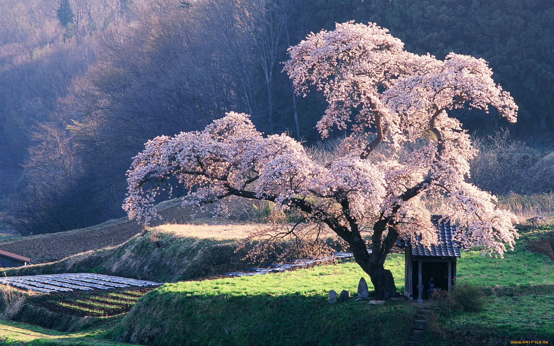 где картинка япония пейзаж его толченых